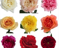 bouquets-blooms-budgets-1